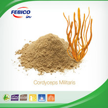 Cordyceps Militaris for Strong Immune System and Improve Heart Health