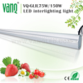 2017 Tomatoes Greenhouse Recommended horticultural bar light 75w with dimmable function DC 85-265V