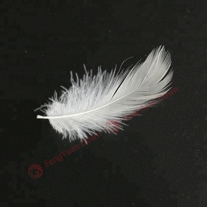 wholesale Chinese high quality filling and decorative material 2 to 4 cm white duck feather