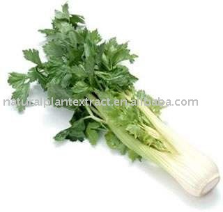Celery Extract Powder 98% Apigenin