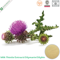 high quality silymarin seed powder milk thistle extract