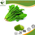 China Supplier 100% Natural organic fruit and vegetable spinach powder with food degree