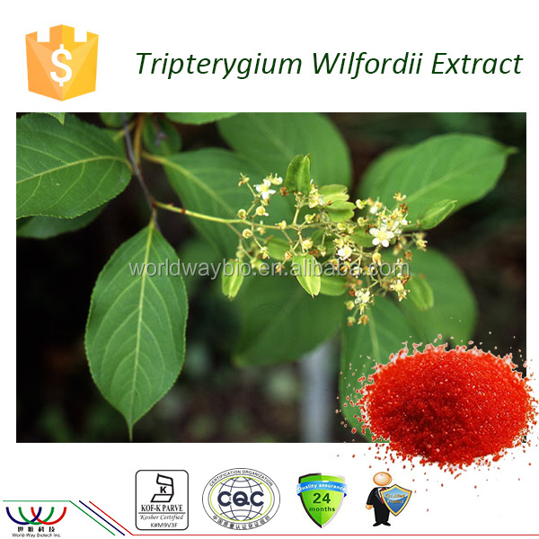 High purity top quality 98% Triptolide / celastrol included tripterygium wilfordii extract