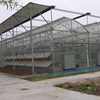 Gutter Height Commercial Polycarbonate Greenhouse For