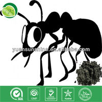 Strong effect black ant extract