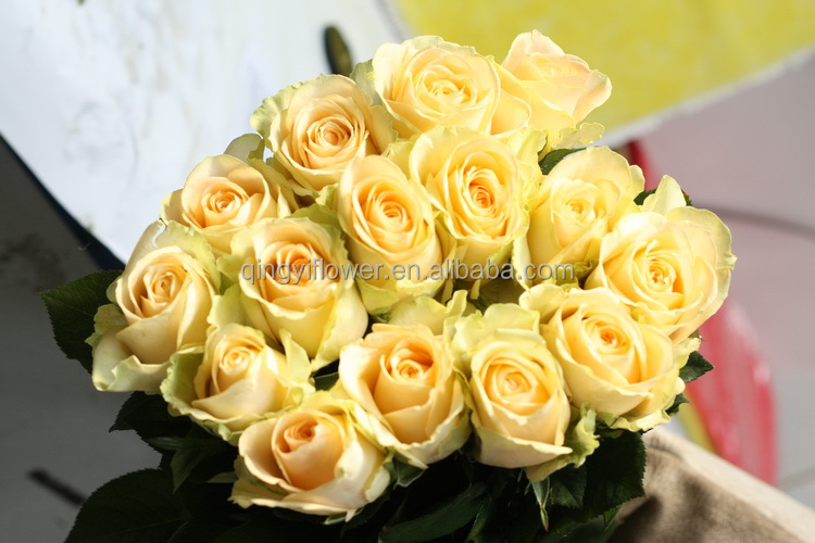 Pure and mild flavor promotional yellow rose flower