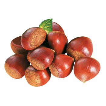 New Crop Fresh Chestnuts--Dandong chestnuts in big size