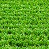 /product-gs/attractive-fashion-best-selling-synthetic-grass-with-flowers-60417096364.html