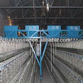 poultry equipment for layers in UAE
