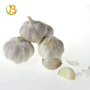 /product-detail/natural-garlic-with-good-quality-in-china-garlic-to-fiji-organic-garlic-without-sprout-62013633834.html