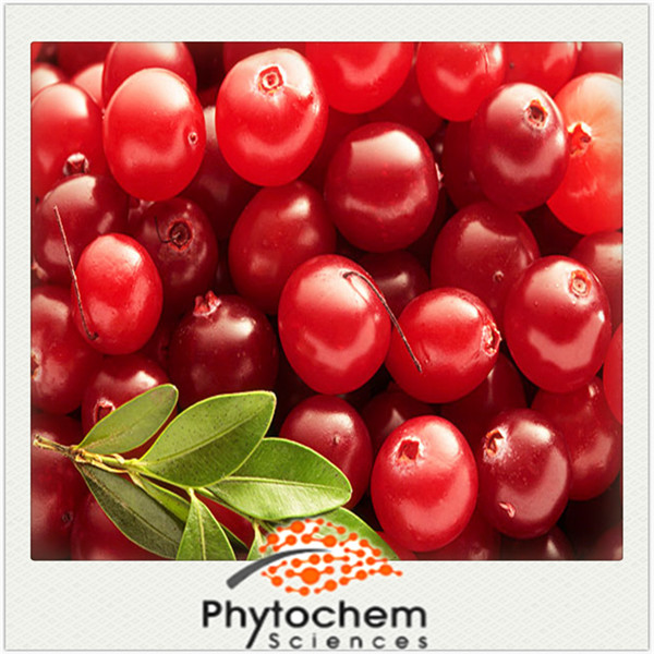 chinese organic fresh fruit product Lingonberry Extract cowberry Extract powder