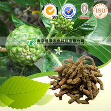 High quality Medicinal Indianmulberry Root, Lonicera Japonica Thunb, Radix Morinda Officinalis