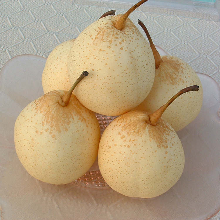 Good Quality Sweet Fresh Ya Pear