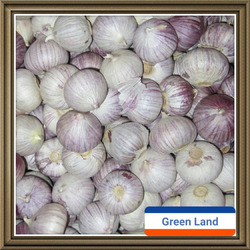 fresh solo garlic for sale