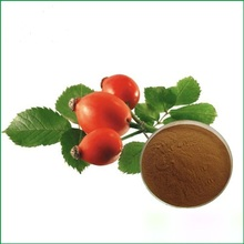Rosehip flower and fruit extract powder,vitamin C nutrition