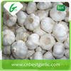 chinese fresh garlic from Shandong factory
