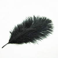 FC442 Costume Trimming Black Colored Ostrich Feathers