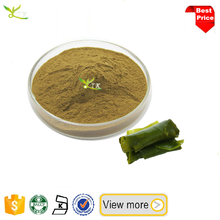 Ecklonia cava extract seaweed powder Fucodian 98% kelp powder
