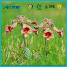 Fever cooler Chinese herb Plant extract Radix Rehmanniae Recens Extract