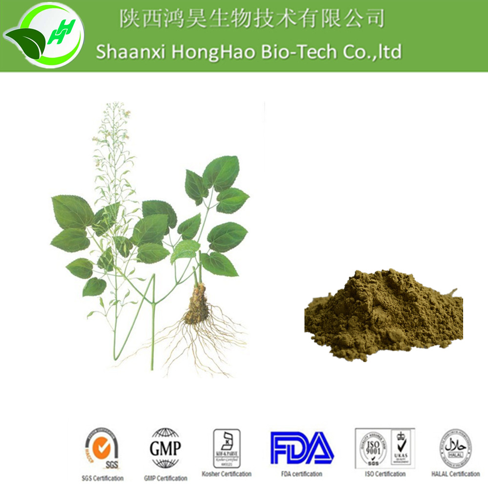 High Quality shaanxi herbal epimedium,medicine for long time sex,epimedium extract
