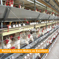 Egg Laying Used Chicken Kennel