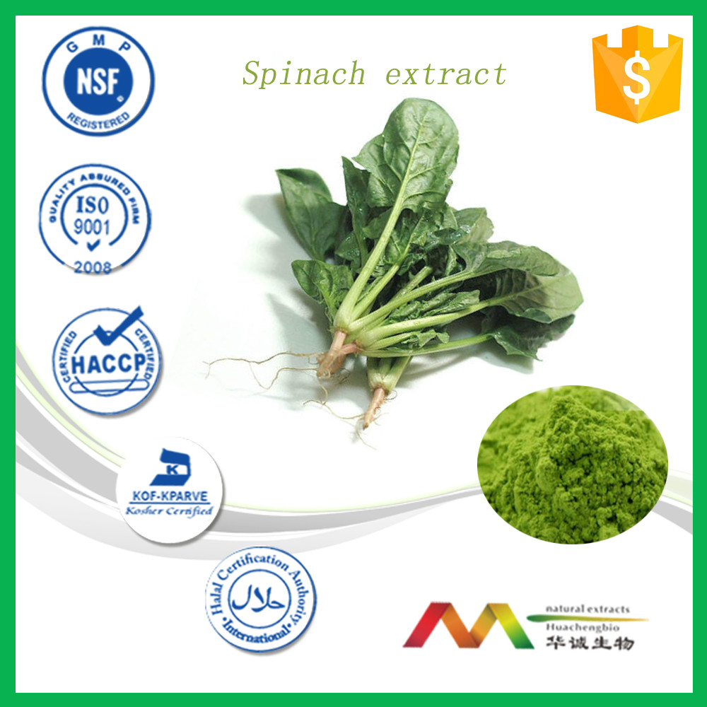 New Product Plant Extract Vegetable Powder Green Spinach Extract