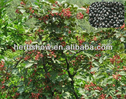 Sichuan pepper seeds for planting