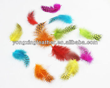 Wholesale cheap Guinea Fowl feathers with all colors
