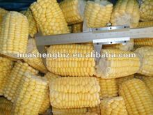 high quality Frozen sweet corn cuts for Sale