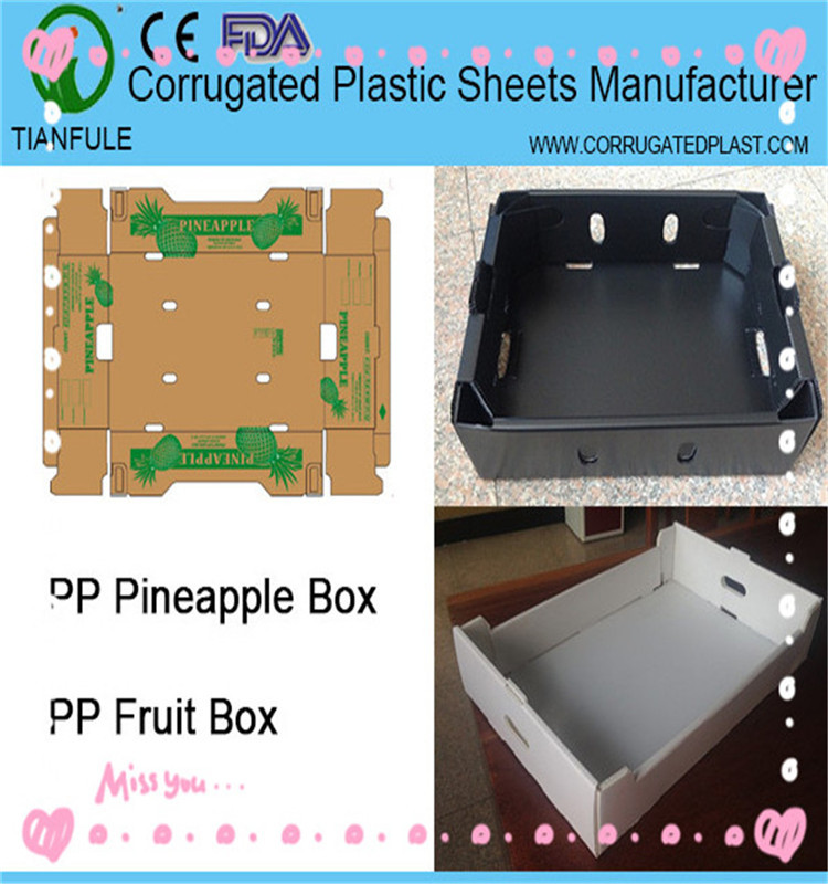 Corrugated plastic coroplast fruit cardboard boxes for packing orange apple mango grape tomato asparagus ginger etc