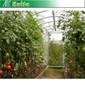 Agricultural Greenhouse for Tomotos