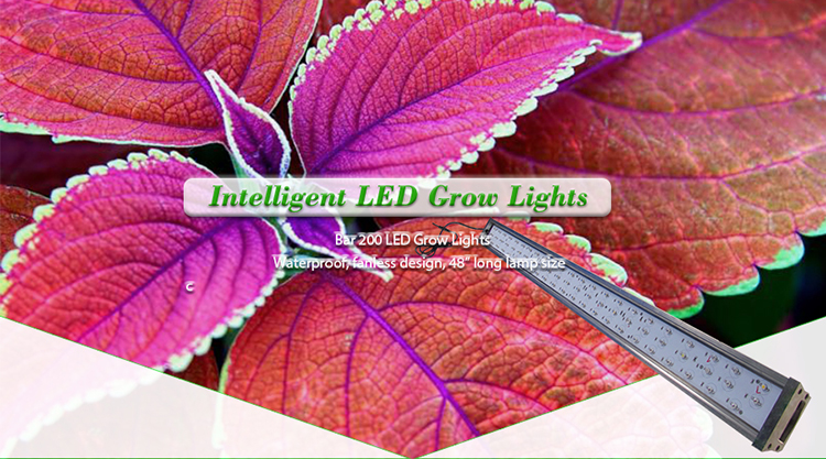 Wifi Control Full Spectrum Greenhouse 3Gp King Led Grow Light With Timer