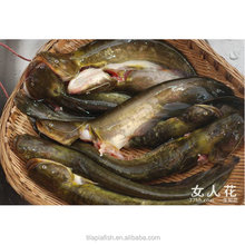 Frozen fresh catfish exporters from China