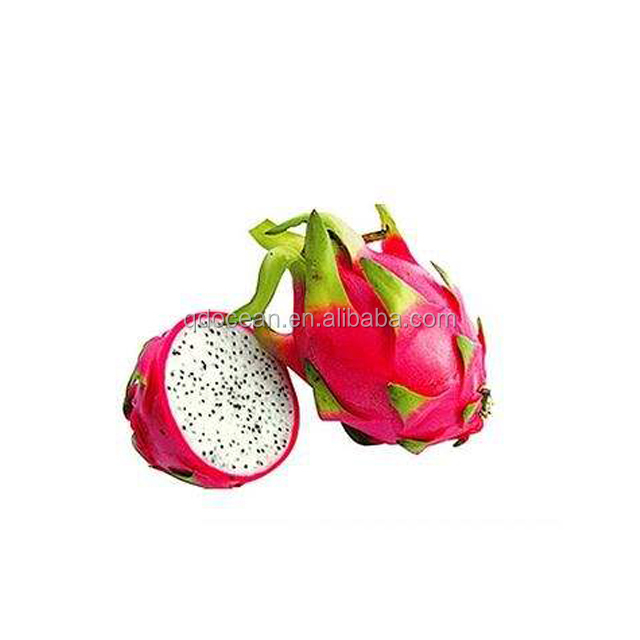 High Quality Red Dragon Fruit , fresh dragon fruit for sale with areasonable price and fast delivey !