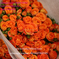 Wholesale Variety 2016 New Arirval Fresh Cut Sunflowers Rose Flower Red With Fast Delivery