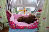 The Professional and Leading Manufacturer of 2013 new pet dog products from China Supplier