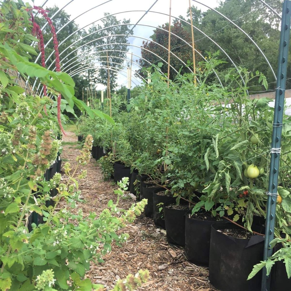 Tomat Tumbuh Tas Greenhouse Growing Tas