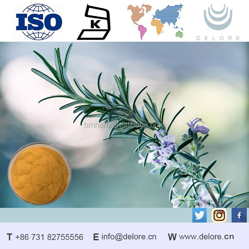 OEM/ODM Manufacturing competitive organic dried rosemary leaf extract essential oil distributor