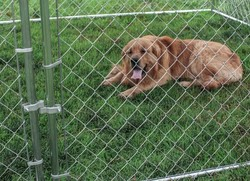 Heavy Duty Dog Kennel , Outdoor chain link Dog Fence , Wire Mesh Dog runs