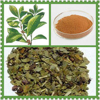 Organic Yerba Mate Leaf Powder Extract