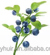 Best selling products Finland source Bilberry Extract 25% Anthocyanidins