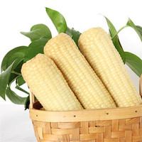 Corn Snack Sweet White Corn Maize in Northeast China