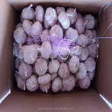 fresh normal white pure garlic for wholesale