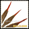 20-25cm Natural Red Tips Feather Pheasant Golden Tail