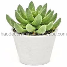 [ ZIBO HAODE CERAMICS]manufacturer supply ECO-friendly glazed plain white flower pot for indoor green succulent plant no hole