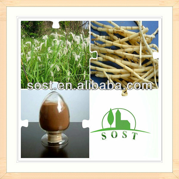 scientific name of plants lalang grass rhizome p.e.