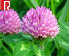 factory products red clover extract isoflavone 2.5% 8% 20% 40% with free sample