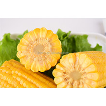 Factory supply sweet corn with vacuum packed