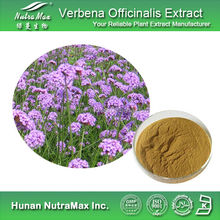 NutraMax Supply-Vervain Extract, Vervain Extract Powder, Natural Vervain Extract