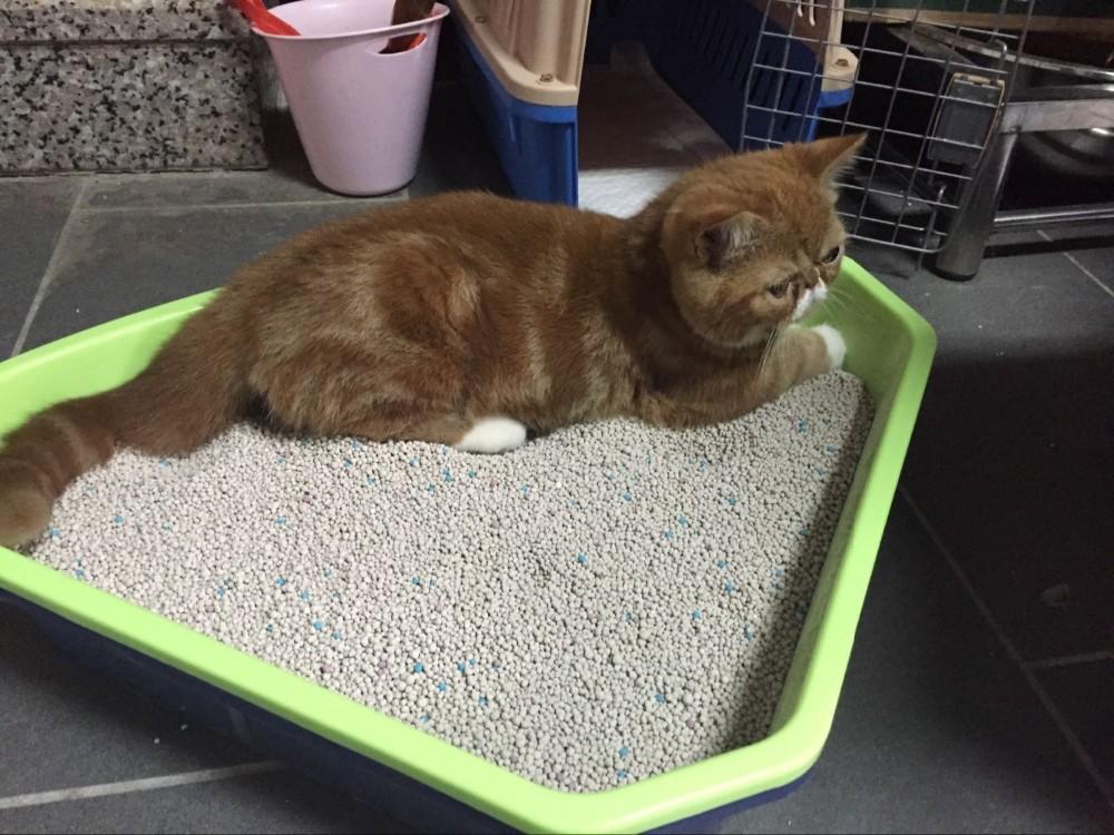 how to buy cat litter in bulk